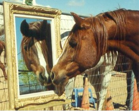 Horse is a Mirror